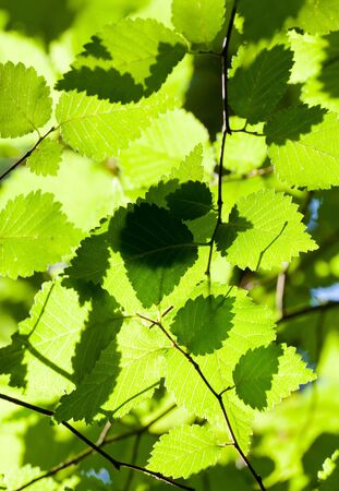 Beautiful, harmonious forest detail,  leaves  Stock Photo - 12038804
