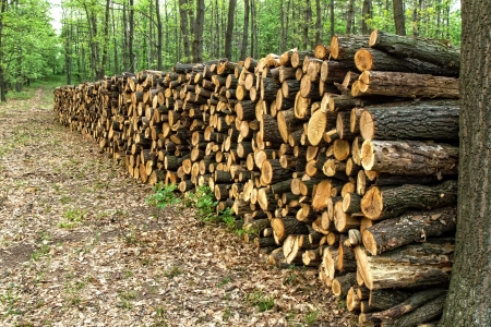 Big pile of wood in a forest road Stock Photo - 13659390