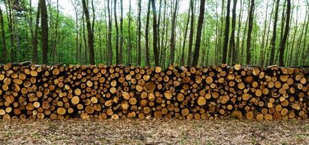 林道木の大きな山 写真素材