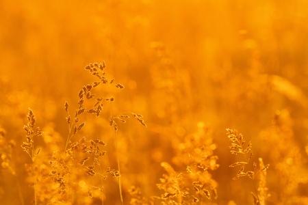 Grass landscape in the wonderful sunset light Stock Photo - 13868363