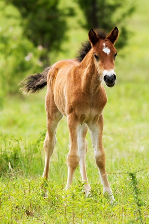 Young foal in the green field photo