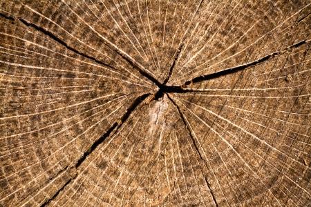 Woodcut from a old oak tree
