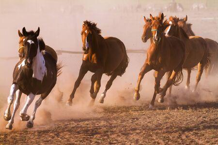 Nice herd gallops in the dust Archivio Fotografico