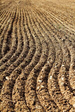 furrow: Plowed field in autumn