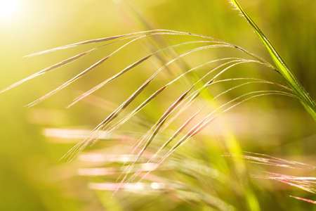 Beautiful, harmonious picture from a blade of grass  Stock Photo - 15563976
