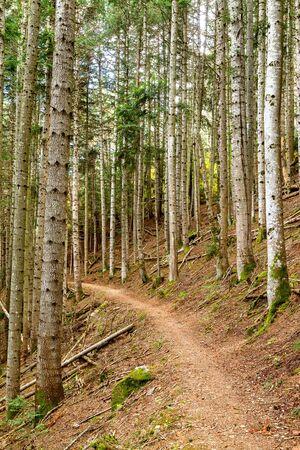 firry: Nice little walk to mountain firry
