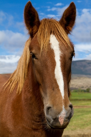 Beautiful brown horse interest for the photograph  photo