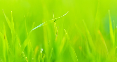 Close up of fresh green grass Stock Photo - 16401999