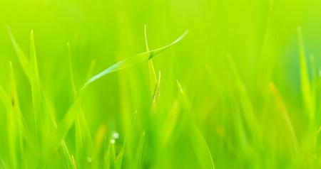 Close up of fresh green grass Stock Photo - 16401999