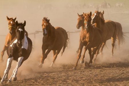 Nice herd gallops in the dust  photo