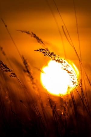 Grass landscape in the wonderful sunset light Stock Photo - 17722533