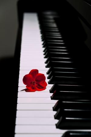 grand piano: Piano con una flor roja Foto de archivo