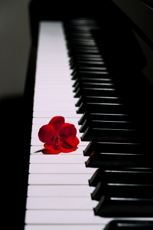grand piano: Piano with a red flower
