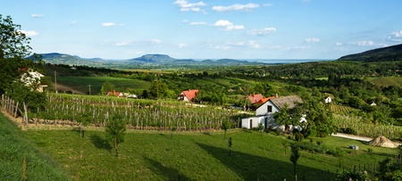vinery: Landscape from Hungary from above