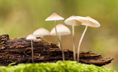 Beautiful forest mushroom in moss photo