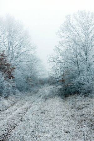 very cold: Frozen forest on a very cold day  Stock Photo