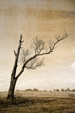 Black and white lanscape with dry tree  photo