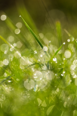 Green grass at the morning Stock Photo - 24198504