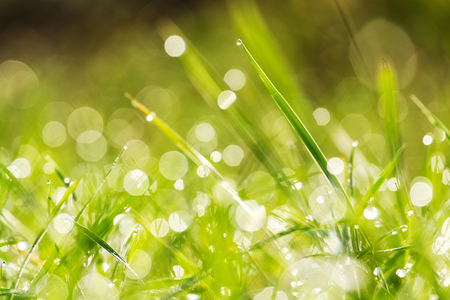 Green grass at the morning Stock Photo - 24391368