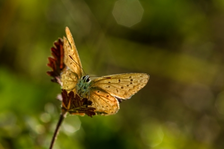Closeup butterfly of common blue Stock Photo - 24391369