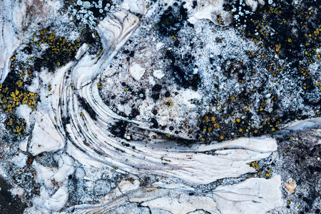 mineralogy: Closeup of ammonite prehistoric fossil on the surface of the stone