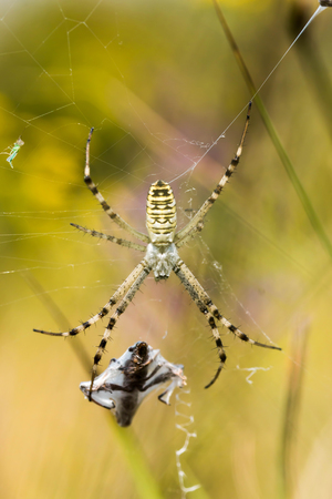 booty: Yellow spider with your booty Stock Photo