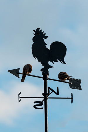 Wind cock with two doves Stock Photo