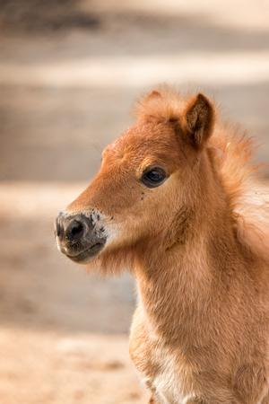 positiveness: Nag joven Retrato del caballo