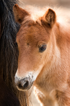 positiveness: Young nag horse portrait Stock Photo