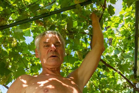wine grower: Senior grapevine farmer portrait Stock Photo