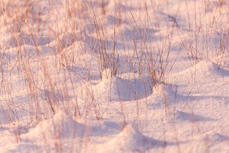 Snowy meadow in december