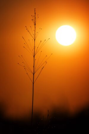 orange sunset: Grass landscape in the wonderful sunset light Stock Photo