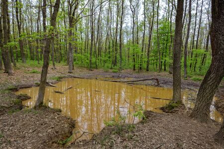 wallowing: Small water puddle in the forest where large mammals come to wallowing in mud