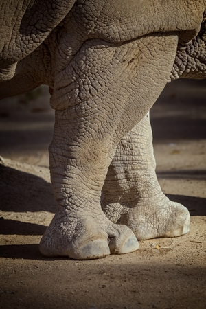 poaching: Close up of rhino in the zoo of Barcelona in Spain