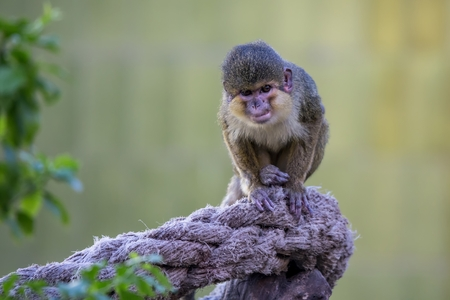 Small monkey in the zoo from Barcelona, in Spain Stock Photo