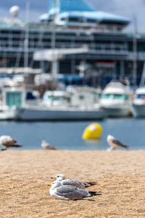 towering: Seagulls on the beach,  fisher boats and cruise ship