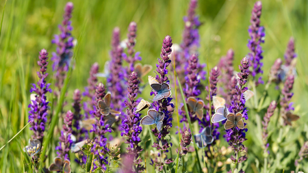 Many butterfly eating together on the flower Stock Photo