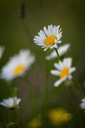 Flowers in a meadow at springtime