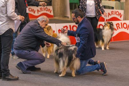 22th INTERNATIONAL DOG SHOW GIRONA March 17, 2018,Spain Editorial