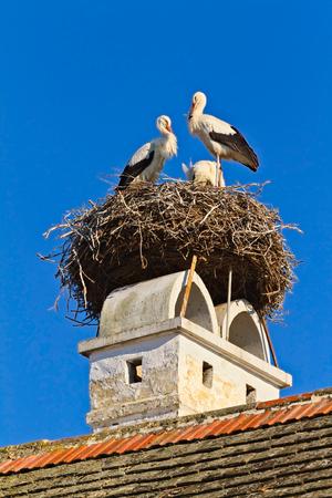 Stork nest in a Austrian village Rust