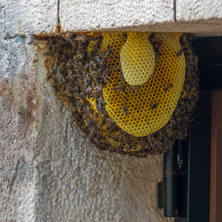 Bee colony on a door in a family house