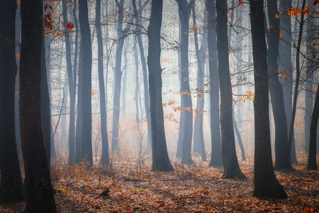 Road in a oak forest in autumn time in a foggy day Reklamní fotografie