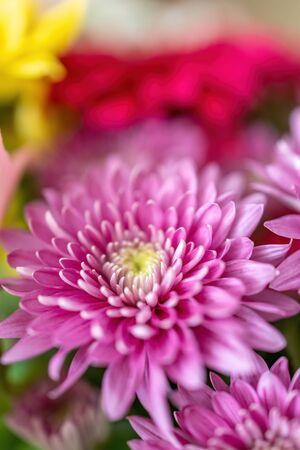 Beautiful purple gerbera flower in a bouquet