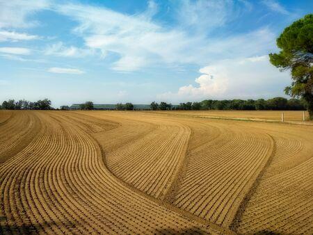 Interesting pattern in the plow field