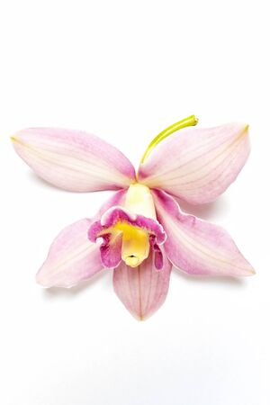 Beautiful pink orchid on white background 写真素材