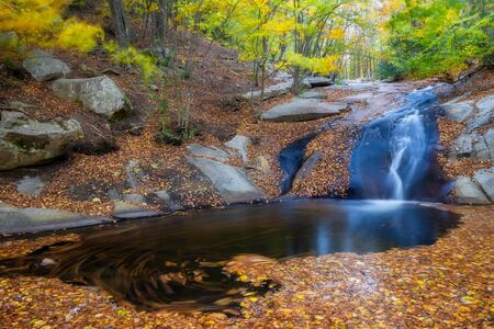 Nice beech forest in autumn in Spain with a small creek, mountain Montseny