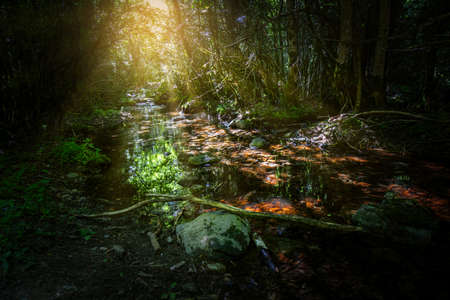 Nice small creek in the forest in park National Sant Maurici in Spain