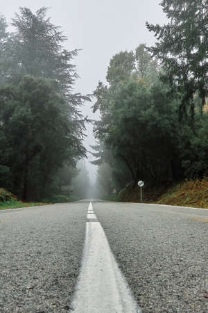 Foggy day in the forest over the asphalt road. Stockfoto