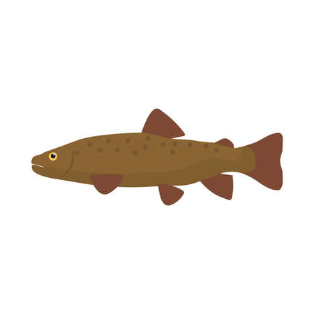 Trout fish side view vector icon illustration. Animal food sea wildlife nature. Ocean bass cartoon symbol art