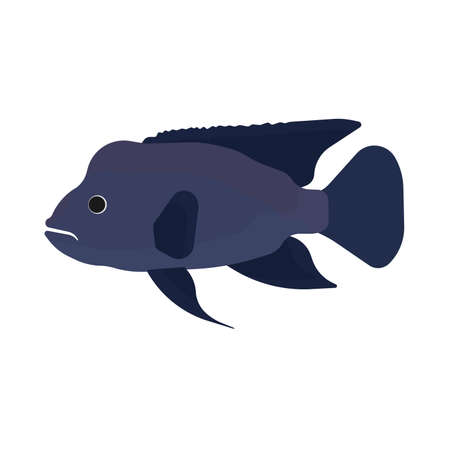 Napoleon fish illustration side view vector icon. Sea underwater blue animal. Cartoon ocean exotic giant silhouette